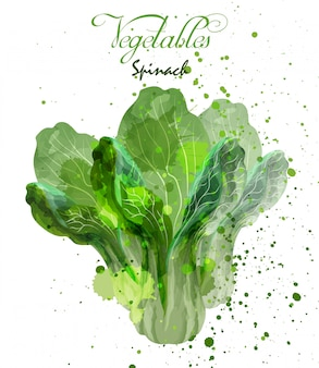 Spinach salad leaves watercolor
