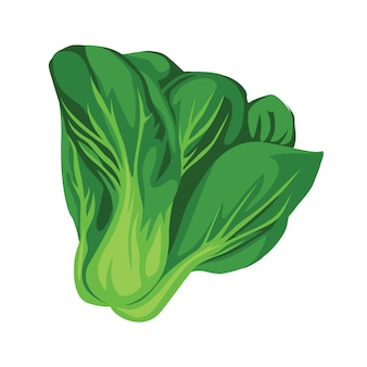 Spinach vegetable realistic vector