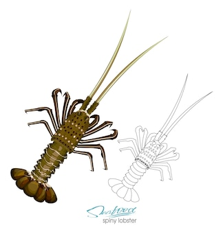 Колючий омар векторные иллюстрации в мультяшном стиле изолированы линейный силуэт колючего омара