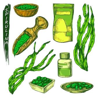 Spirulina icons set seaweed sketch in color