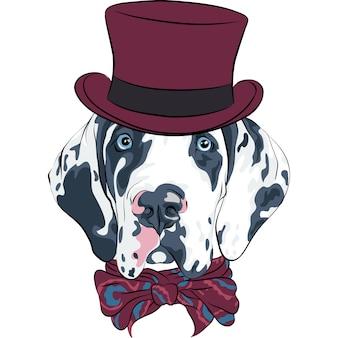 斑点犬グレートデーンの品種