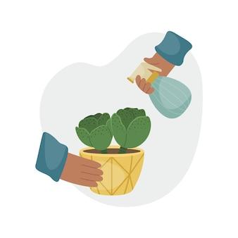 Опрыскивание домашнего растения из пульверизатора. посадка растений. декоративные растения в интерьере дома. плоский стиль.