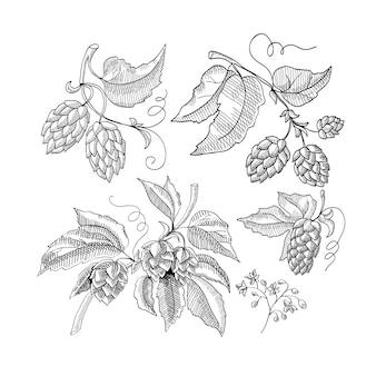 Rametto di schizzo decorativo di luppolo con illustrazione di cartoni animati disegnati a mano di germogli e foglie