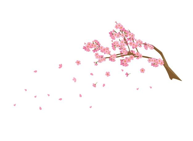 Sprigs of cherry tree flowers sakura fall spatter spring annual season of japan.