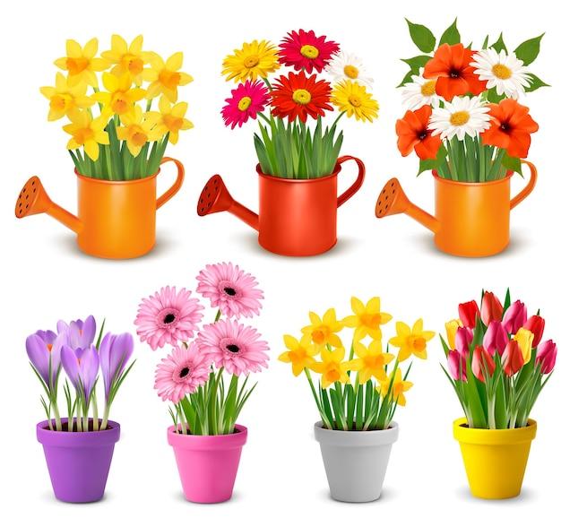鉢植えの春と夏の色とりどりの花ベクトル