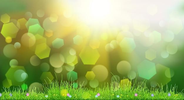 하늘, 태양, 잔디 및 꽃과 녹색 색상의 봄 배경
