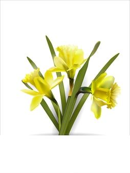 咲く水仙春のコンセプトと春の背景
