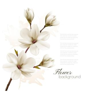 Весенний фон с поздним завтраком цветения белой магнолии.