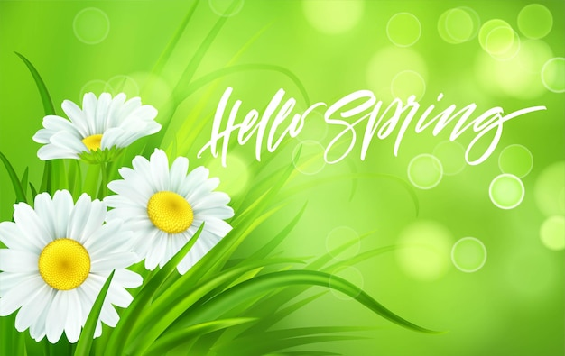 Spring background with daisies and fresh green grass. hello spring handwriting lettering.  illustration