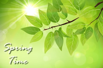 Spring background with fresh green leaves