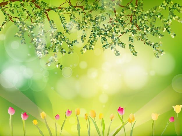 Весенний фон с тюльпанами.