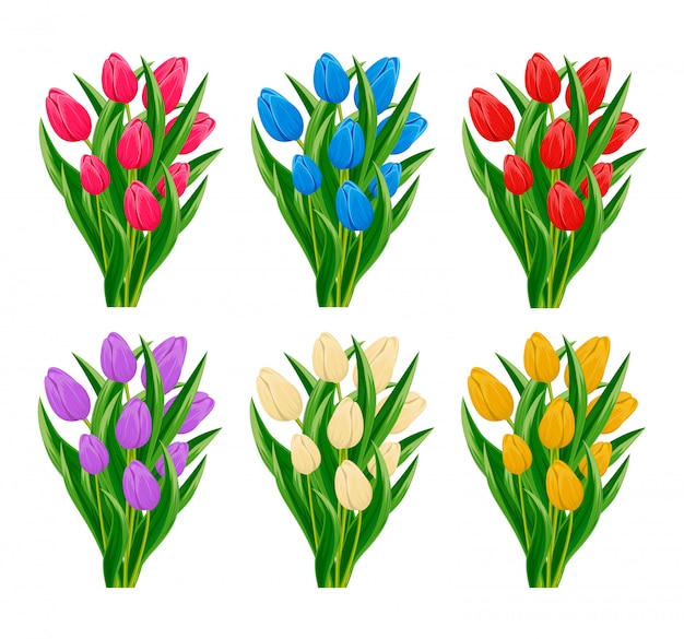 Spring blooming tulip flower set