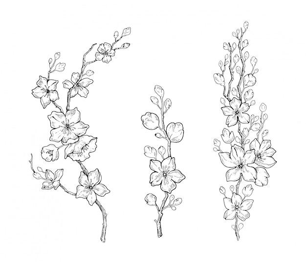 Spring cherry flower blossom, botanical black line sketch set.