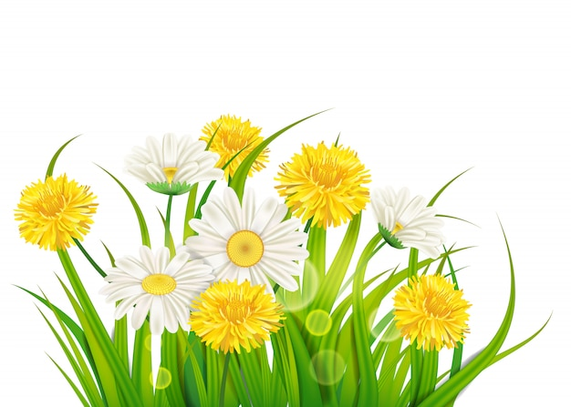 봄 데이지와 민들레 배경 신선한 녹색 잔디, 쾌적한 육즙 봄 색상