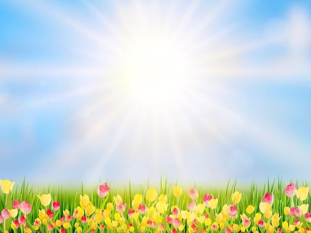 Предпосылка пасхи весны с красивыми желтыми тюльпанами.