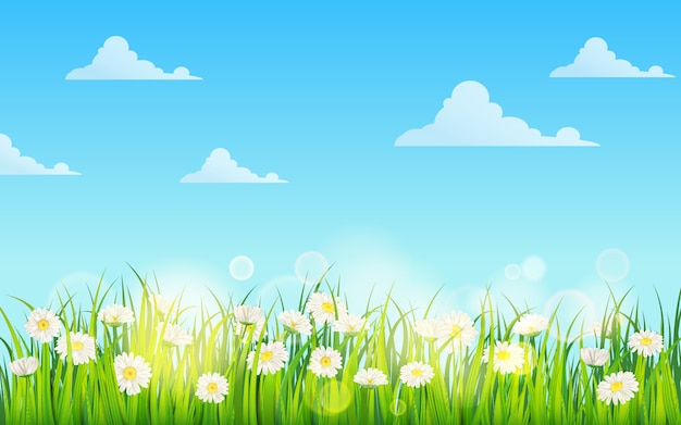 Spring field of flowers of daisies, chamomile and green juicy grass, meadow, blue sky, white clouds