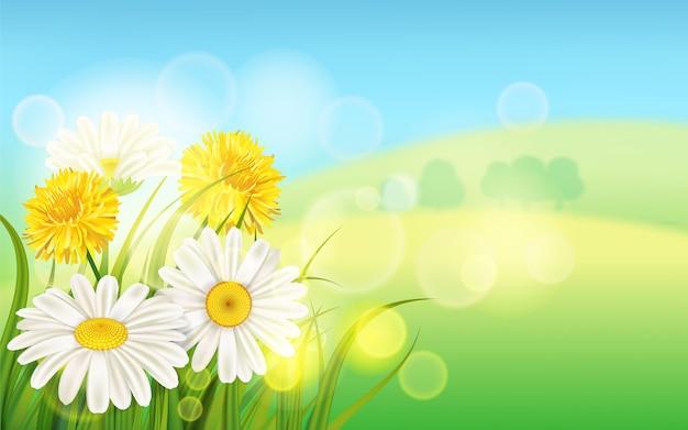 Весенний цветок ромашка сочная, ромашки желтые одуванчики зеленая трава фон