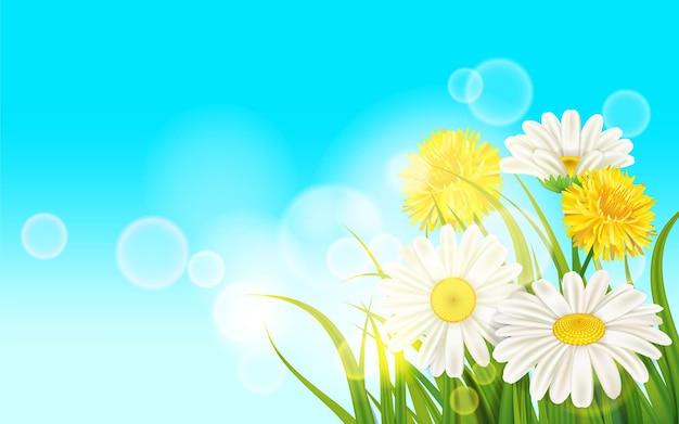 봄 꽃 데이지 육즙, chamomiles 푸른 잔디에 노란 민들레