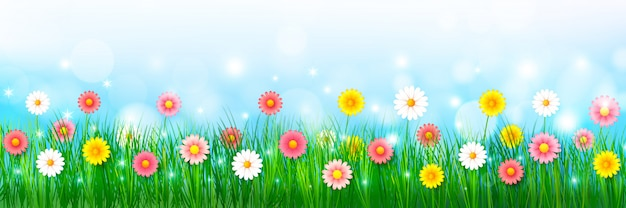 Spring flower and green grass background