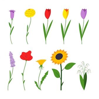 Весенние цветы мультфильм плоский простой набор, изолированных на белом