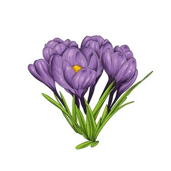 봄 꽃 크로커스와 스노 드롭