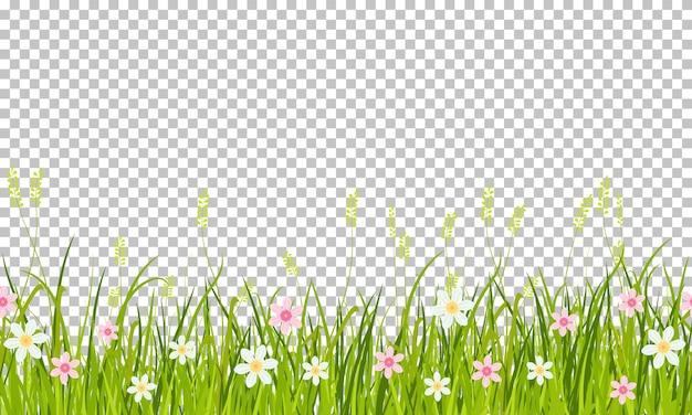 春の草と花の境界線、透明な背景に分離されたイラスト