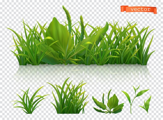 Spring. green grass, 3d realistic   set
