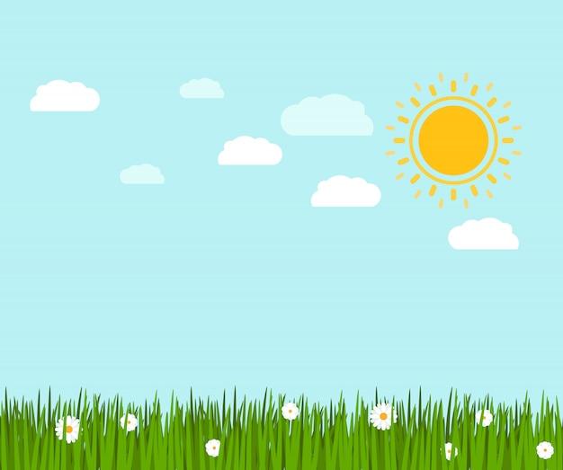 봄 녹색 잔디와 카모마일 풍경