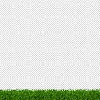 春の緑の草の境界線