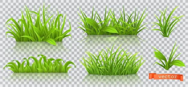 Spring, green grass.