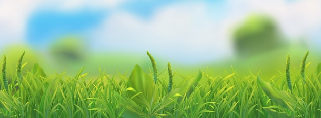 Spring landscape. green grass  illustration