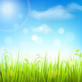 春の牧草地の草の青い空を背景