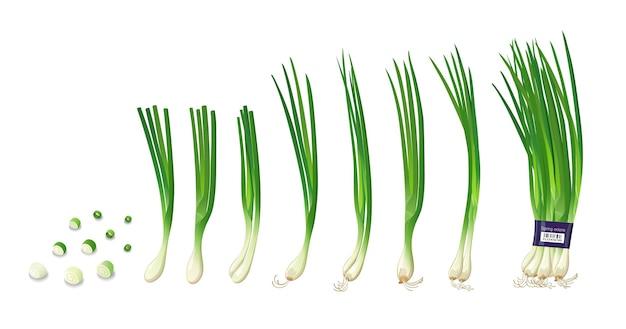 Коллекции зеленого лука, изолированные