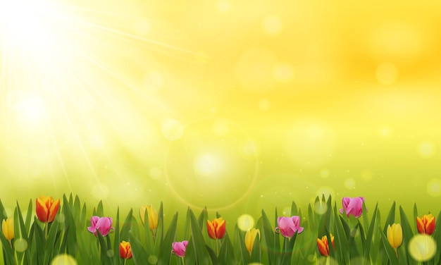 春や夏の背景。チューリップ畑のある晴れた日。