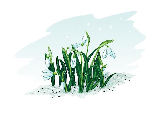Spring snowdrop illustration