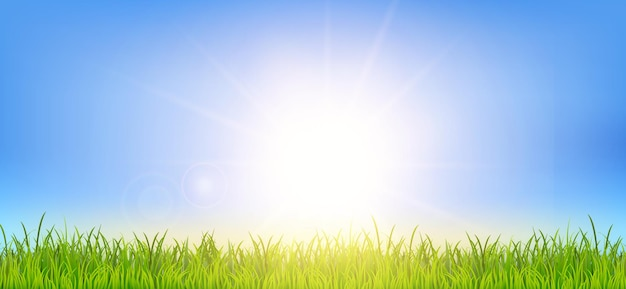 Spring or summer background with green grass field and sunrise landscape
