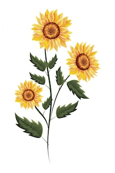Spring sunflower drawinf with leaves