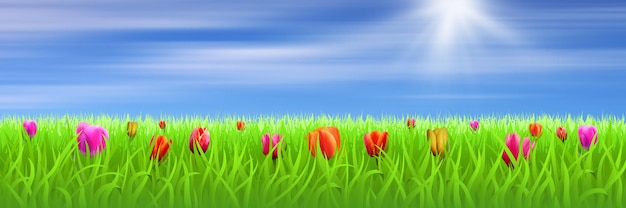 牧草地にチューリップと春の日当たりの良い風景