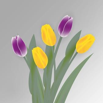 흰색 바탕에 봄 튤립 꽃
