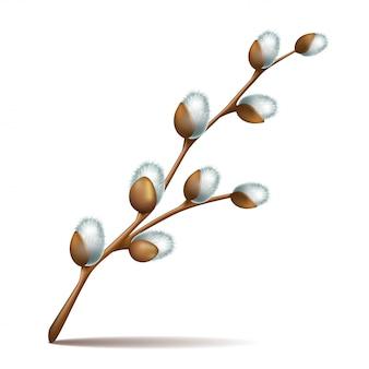 Весенние веточки пасхальные цветы киска ива дерево