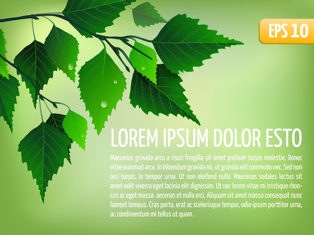 Spring vector background with leaves. elegant floral card template. eps10