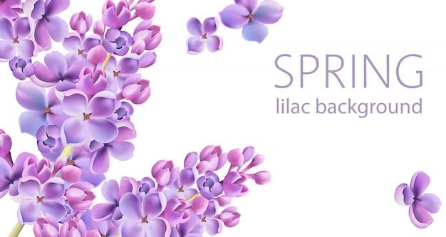 Весенний сиреневый цветочный фон с местом для текста