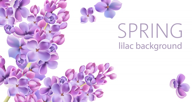Springtime lilac flower background with place for text