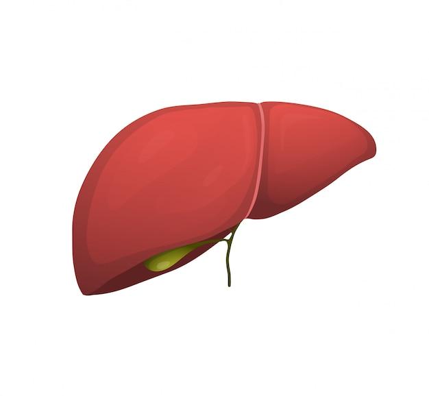人間の内臓の図で成長している芽。肝臓の苗木、胆嚢の超現実的な描画。ベジタリアンダイエット、エコ、オーガニック食品を食べる。健康的なライフスタイルのメタファー。医学とヘルスケア