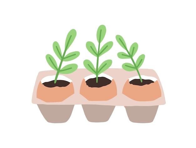 白で隔離された鉢やプランターで育つ芽や苗