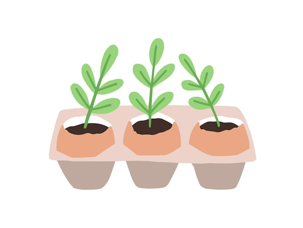 Sprouts or seedlings growing in pots or planters isolated on white