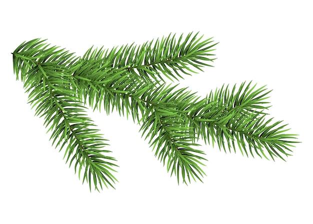 白い背景で隔離のトウヒの枝緑のモミ現実的なクリスマスツリー