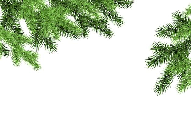 白い背景の上のトウヒの枝緑のモミ現実的なクリスマスツリー