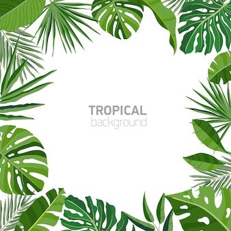 Квадратный фон или фон с рамкой или бордюром из зеленой пышной тропической листвы или экзотических листьев растений тропического леса