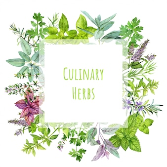 Square banner with watercolor kitchen herbs and plants